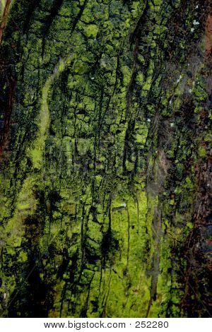 Forest Texture Bark