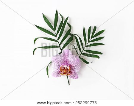 Styled Stock Photo. Jungle Floral Composition Of Green Palm Leaves And Pink Phalenopsis Orchid Flowe