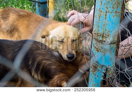 Shelter for stray dogs. Homeless dog in aviary is happy with new owner. Volunteers hand with homeless dog outdoors. Concept of volunteering and animal shelters poster
