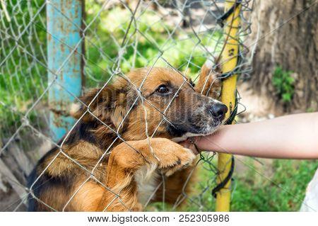 Outddor Homeless Animal Shelter. Sad Mongrel Dog Happy Visitor Shelter. Girl Choosing A Dog For Adop