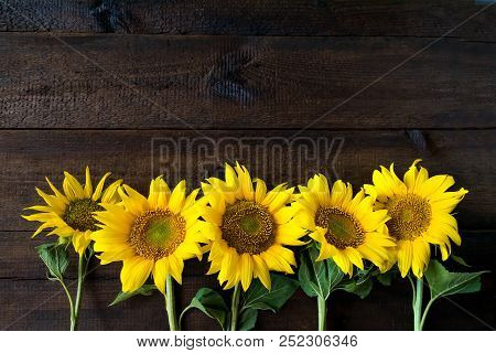 Bright Yellow Sunflowers On Natural Rustic Texture Wooden Board. Mockup Banner With Flowers Of The S
