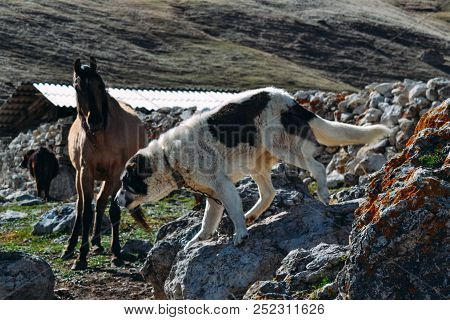 Dog And Horse In A Rocky Terrain