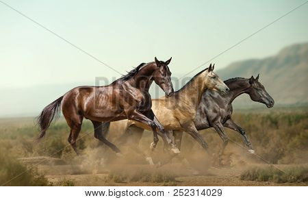 Three Beautiful Horses In Prairies On The Wild