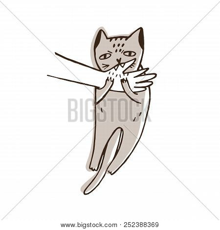 Angry Cat Biting Hand Of Its Owner Isolated On White Background. Aggressive, Evil Or Furious Kitty.