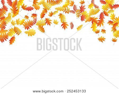 Oak, Maple, Wild Ash Rowan Leaves Vector, Autumn Foliage On White Background. Red Orange Yellow Wild