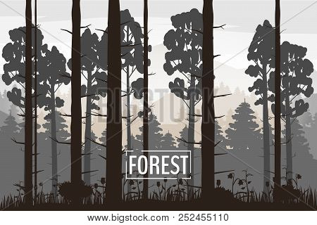 Forest Landscape Minimalistic Illustration. Pines Trees Silhouettes. Nature Scene. Realistic Color B