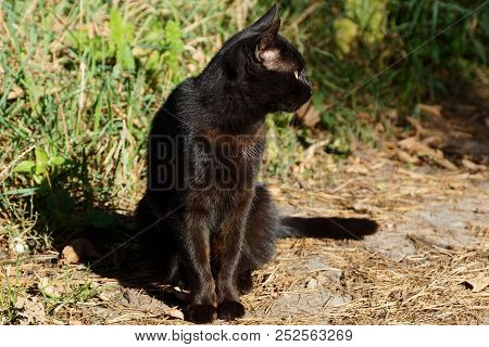 Big Black Cat Sitting On The Ground Near The Green Grass
