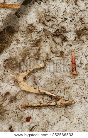 Remnants of animals -bones - in the wolf enclosure.Remnants of animals -bones - in the wolf enclosure. Wolfs coop in winter. poster