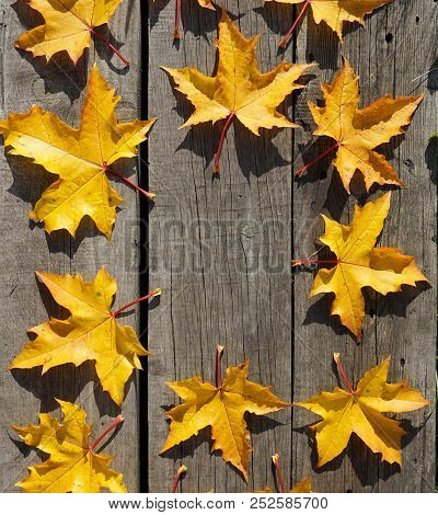 Yellow Autumn Leaves Of Maple In Circle Pattern On Woooden  Rustic Background