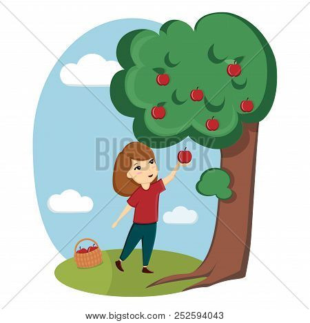 A Girl Collects Apples From A Tree. Nature, Village, Farm. Ecological Useful Products