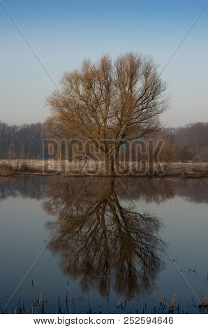 Alone Tree That Is Reflected In The Water In Sring Time