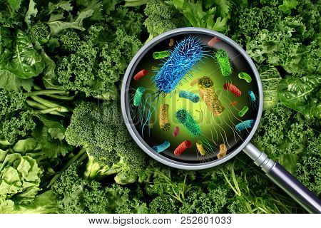 Bacteria And Germs On Vegetables And The Health Risk Of Ingesting Contaminated Green Food Including