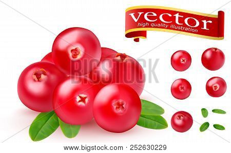 Realistic Juicy Ripe Red Berries Of Cranberries With Green Leaves On A White Background. 3d Realisti