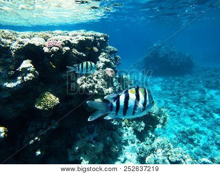 Nice Fish Among Coral Reefs, Coloured Photography
