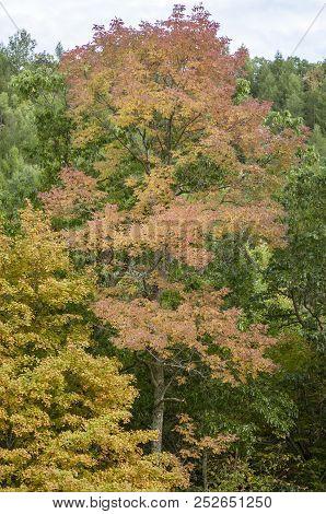 Yellow Orange Green Trees Otter Brook Dam (vertical Format)