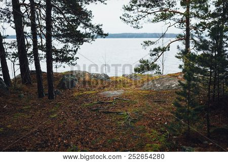 lake view through the forest, scandinavian woodland scenery