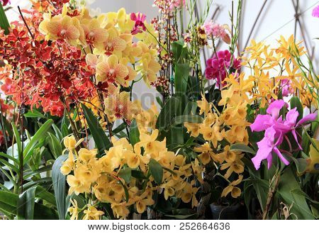 Many Colorful Orchids As A Floral Background