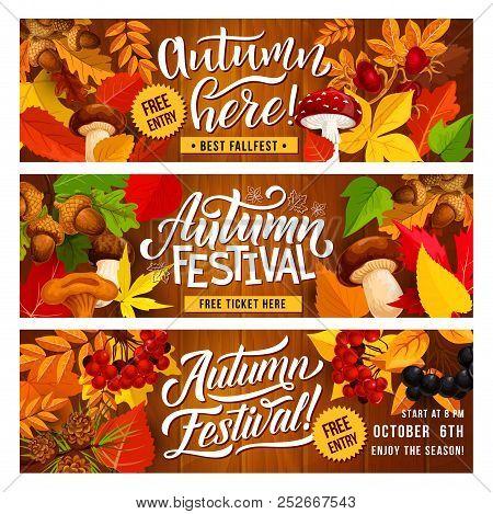 Autumn Harvest Festival Banner With Fall Season Floral Border. Fallen Leaf, Orange Maple And Oak Fol