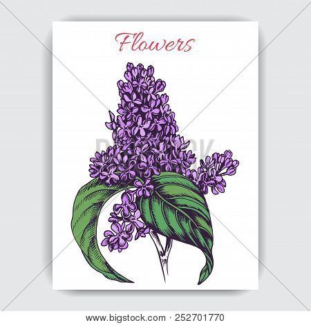 Vector Hand Draw Colorful Illustration With Lilac.