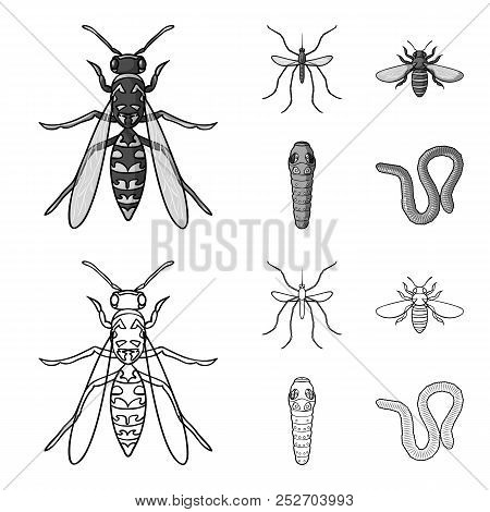 Worm, Centipede, Wasp, Bee, Hornet .insects Set Collection Icons In Outline, Monochrome Style Vector