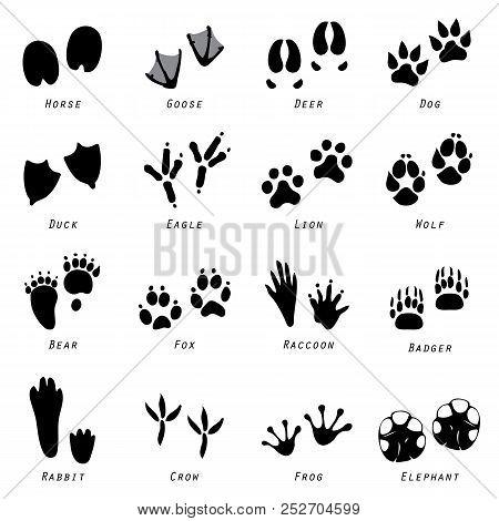 Animal Spoor Mammal Wild Life Footprints Icon Vector