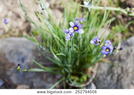 Many Small Beautiful Garden Flowers On The Sun