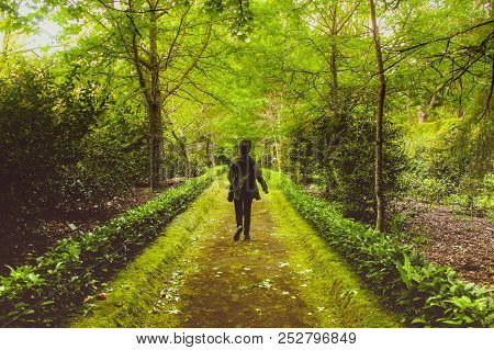 Path with beautiful green colors, trees, grass, moss, foliage, shades of green, light and darkness, textured floor, filled with leaves. Terra Nostra is an area of extreme beauty, with diverse flora, endemic azorean species, and corridors, trails, paths of poster