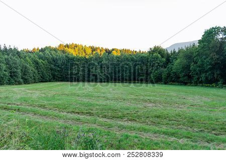 Autumn Landscape With Autumn Trees In The Park. Autumn Nature -yellowed Autumn Park In Autumn Sunny