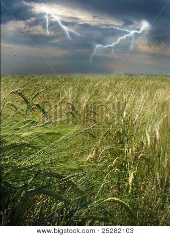 Years thunder-storm above wheaten a field