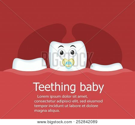 Teething Baby Banner With Cartoon Tooth Character With Nipple. Normal Growth Of Baby Teeth Vector Il