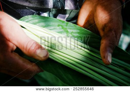 Amazonian Indian Tribe Member Collecting Plants For Decoration And Painting