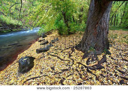 Cache River Utah In The Fall