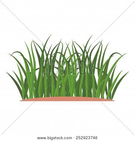 Bunches Of Green Grass On An Earthen Mound.