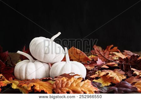 Fall Leaves Scattered Around A Stack Of Three White Pumpkins. Extreme Shallow Depth Of Field With Se