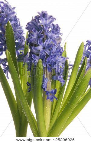 Wet Purple Flowers