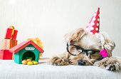 Funny cute Yorkshire Terrier (Yorkie) Dog in red party hat cap lies on table on background of festive garland and decor. Party, after party, fun, holiday background, banner. Copy space poster