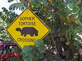 gopher tortoise crossing sign posted on pole poster
