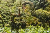 Incredibly detailed plant sculptures of all sorts of animals in natural park, small animals, big birds, elephants, dinosaurs. Bushes cut like bonsai trees but in the shapes of animals. Bonsai Animals in Terra Nostra Sao Miguel Azores. poster