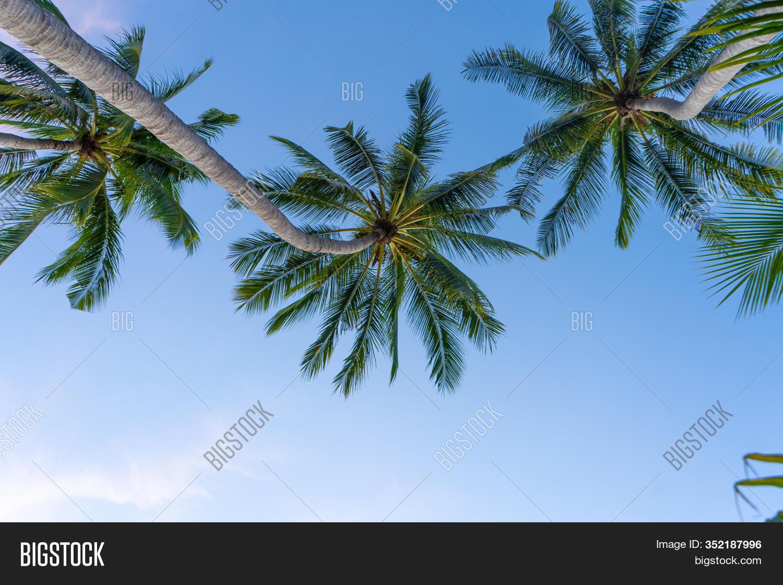 Tropical Palm Trees Image Photo Free Trial Bigstock