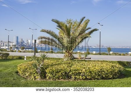 Urban Landscape With A Tree Standing Alone. Seaside Park Of The City Of Baku Azerbaijan With Decorat