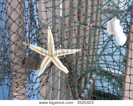 Starfish And Shell On Net