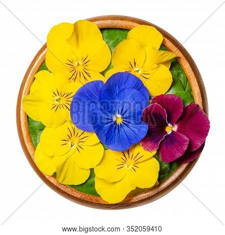 Fresh Edible Flowers, Horned Pansy Over Field Salad Leaves In Wooden Bowl. Yellow, Violet And Purple