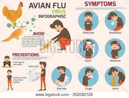 Avian Flu Infographic Elements. Bird Flu Disease. Discussion On Bird Flu Virus And Symptoms. Health