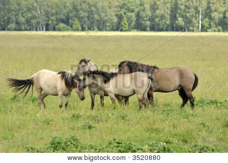 Group of horses grazing on the meadow poster