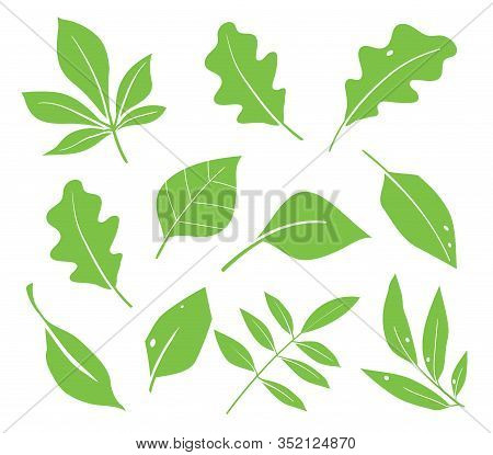 Leaves Icon Vector. Various Shapes Of Green Leaves Of Trees And Plants. Elements For Eco And Bio Log