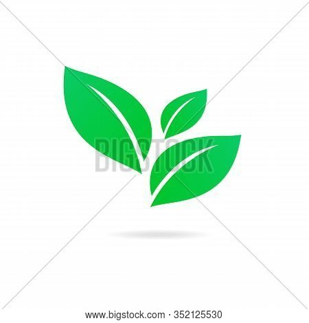 Flat Leaves Icons. Abstract Green Leaf Logo Vector Design.