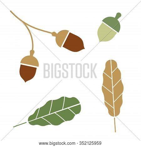 Oak. Branch. Isolated Acorns On White Background.