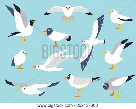 Vector Set Of Beautiful Seagulls In A Flat Style Isolated On White Background. Sea Gull, A Beautiful