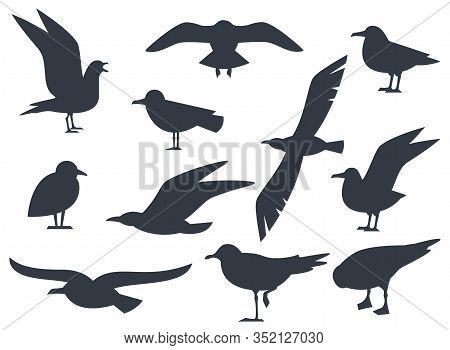 Seagull Silhouette Set Isolated On White Background Vector. Set Flying Seagull. Black Birds On A Whi