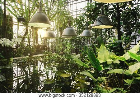 Various Plants And Flowers In The Reservoir Under The Fluorescent Lights. Evergreen Plants In Botani